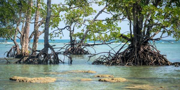 Ricardo Salles revoga resoluções de proteção e preservação à manguezais e arrisca meio ambiente