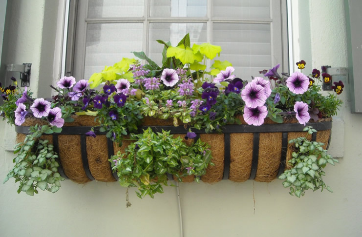 horta caseira para auto cuidado
